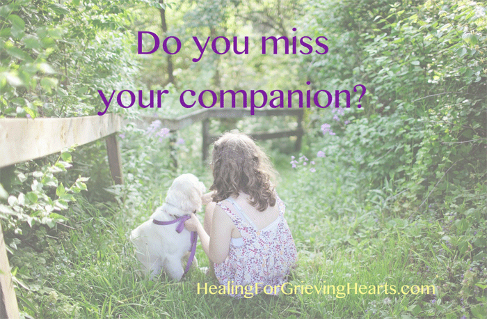 Do you miss your companion? Feeling grief after the loss of a pet is normal. HealingForGrievingHearts.com